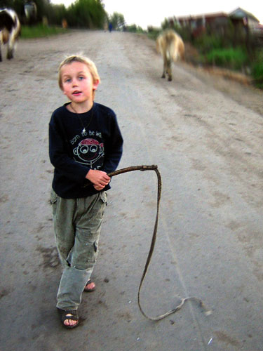 Сначала корова надеялась, что это временно, и Никите пришлось немало попотеть, убеждая её кнутиком или палочкой.