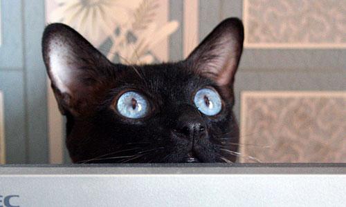 Кошка в окошко на небо глядит
