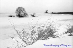 Природа Помосковья зимой
