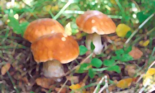 Мы ездили за грибами в Алабино