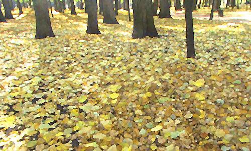 9 сентября — Осенины