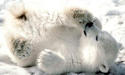 Спят твои соседи - белые медведи,Спи скорей и ты, малыш!