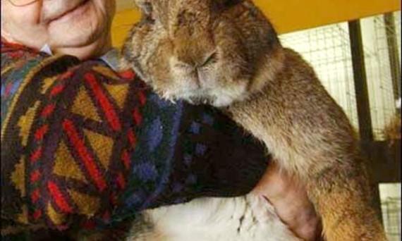 Куда отправлять кроличьи шкурки для отделки меха?