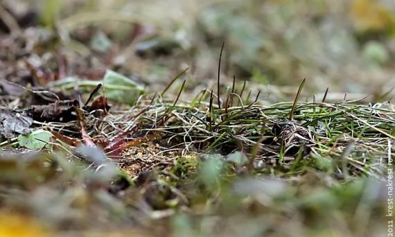 Апрельская трава.