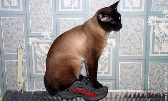 Кот Невилл на батарее отопления.