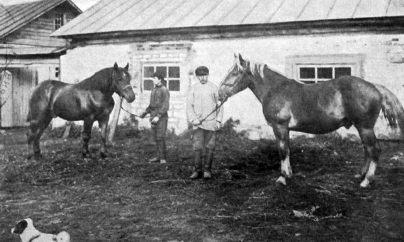 На колхозной конюшне. 1926 год.