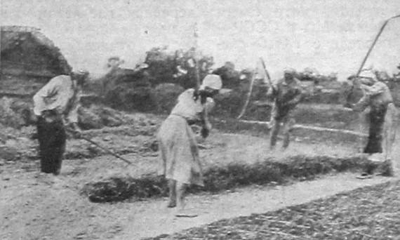 Молотьба в четыре цепа. 1927 год.