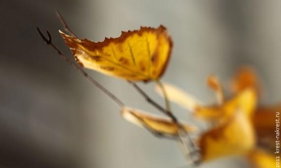 Осенний берёзовый лист.