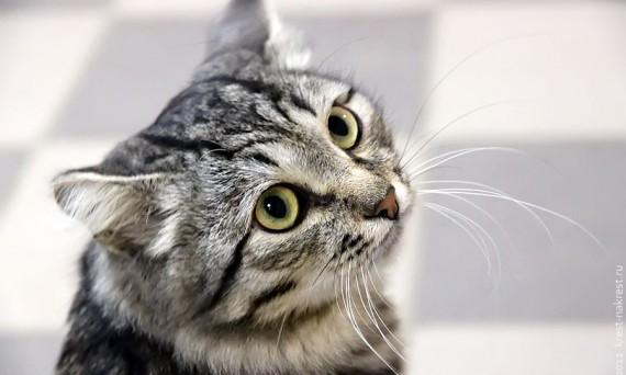 Котик, который думает, что он совушка.
